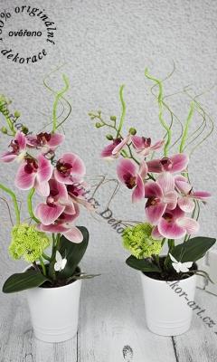 Ružové orchidea ako živá